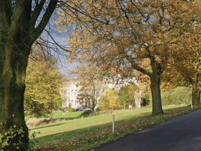 shrigley-autumn