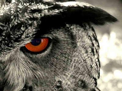 Owl Pic 1