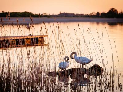 Wineport Swans